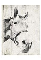 Vintage Horse Framed Print