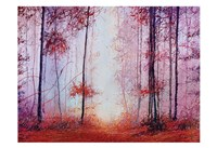 Red Foggy Forest Fine Art Print