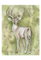 Sterling Deer Framed Print