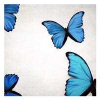 Blue Morphos Fine Art Print