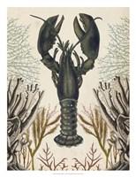 Antiquarian Menagerie - Lobster Framed Print