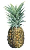 Watercolor Pineapple II Framed Print