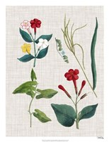 Floral Assemblage III Framed Print
