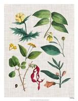 Floral Assemblage VI Framed Print
