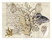 Sealife Journal IV Framed Print