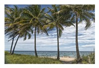 Beach Palms Fine Art Print