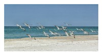 Beach Skimmers Fine Art Print
