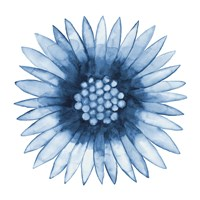 Blue Daisy Framed Print