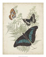 Butterflies & Ferns II Framed Print