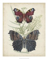 Butterflies & Ferns III Framed Print