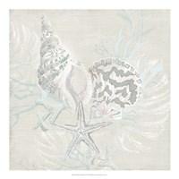 Weathered Shell Sketch II Framed Print