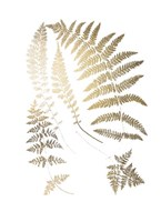 Gold Foil Ferns II - Metallic Foil Framed Print