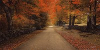 October Lane Fine Art Print