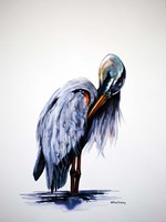 Preening Blue Heron Fine Art Print
