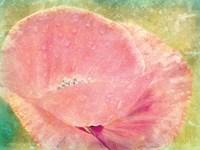 Baby Poppy Fine Art Print