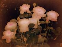 Garden Poetry Fine Art Print