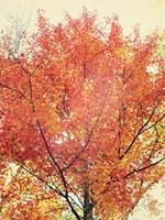 October Tree Fine Art Print