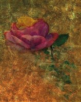 Old Italy Roses Fine Art Print