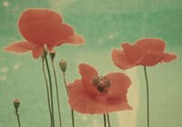 Peaceful Poppies Fine Art Print