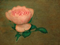 Rose in Water Fine Art Print
