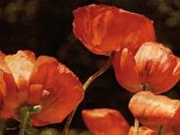 Abundant Poppies Fine Art Print