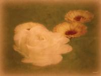 Calendula Soiree Fine Art Print