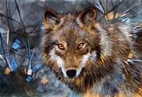 Interference Wolf Fine Art Print