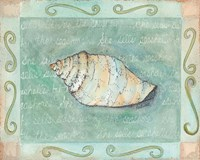 Conch Seashell Framed Print