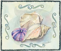 Seashells III Framed Print