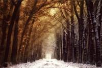 Autumn to Winter Fine Art Print