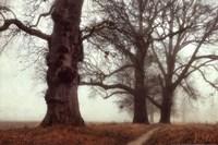 Misty Trees Fine Art Print