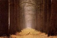 Yellow Path Fine Art Print