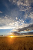 Wheat Field Sunset Fine Art Print