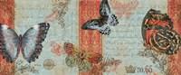 Three Butterflies Fine Art Print
