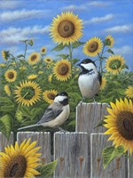 Chickadees And Sunflowers Fine Art Print