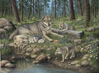 Grey Wolf Mother And Pups Fine Art Print