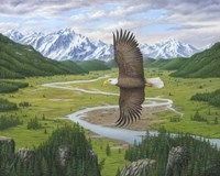 Soaring Above Fine Art Print