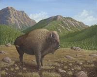 Bison Fine Art Print