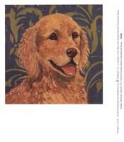 Golden Retriever Fine Art Print