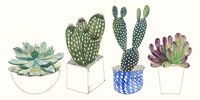 Four Succulents II Fine Art Print