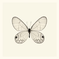 Butterfly I Framed Print