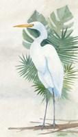 Standing Egret II Framed Print