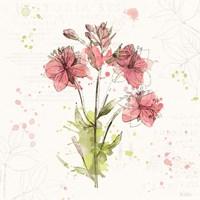 Floral Splash V Framed Print