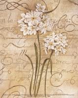 Calligraphy Narcissus Fine Art Print