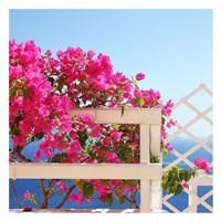 Santorini Blooms Fine Art Print
