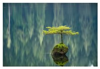 Fairy Lake Bonsai Fine Art Print