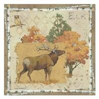 Elk Country Fine Art Print