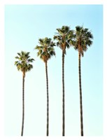 Four Palm Trees Fine Art Print