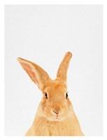 Rabbit Fine Art Print