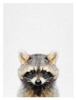 Raccoon Fine Art Print